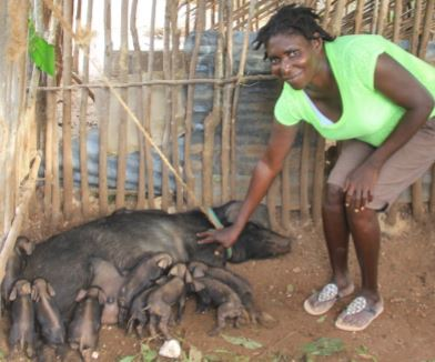 A  program participant with the sow she  selected shortly after it gave birth.
